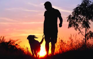 טיול תמים עם הכלב