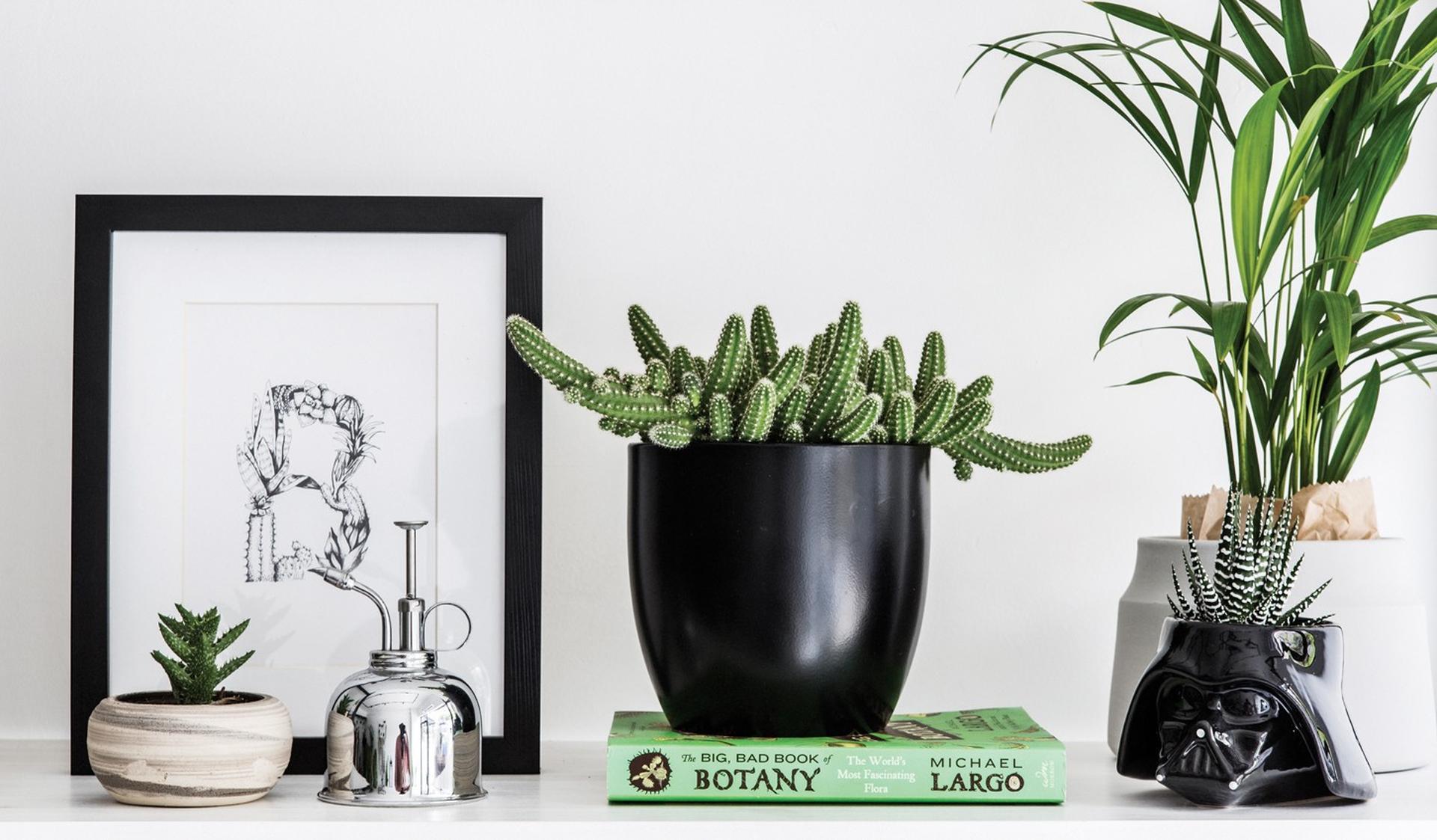 חנות אורבנית רק לעציצים וצמחים, We Love Plants