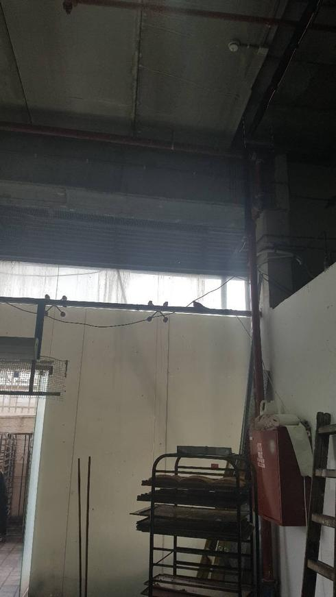"""ציפורים מעל מאפים בתוך המטבח ב""""האופה מבגדד"""". צילום: דוברות עיריית פתח תקוה"""