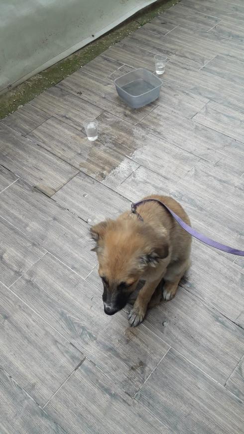 הכלב שחולץ. צילום: דוברות כבאות והצלה מחוז מרכז